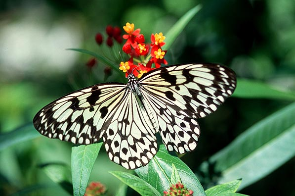 tropical butterfly photos from Butterfly World, Fort ...