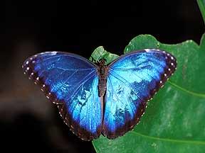 http://www.harkphoto.com/morphocover.jpg
